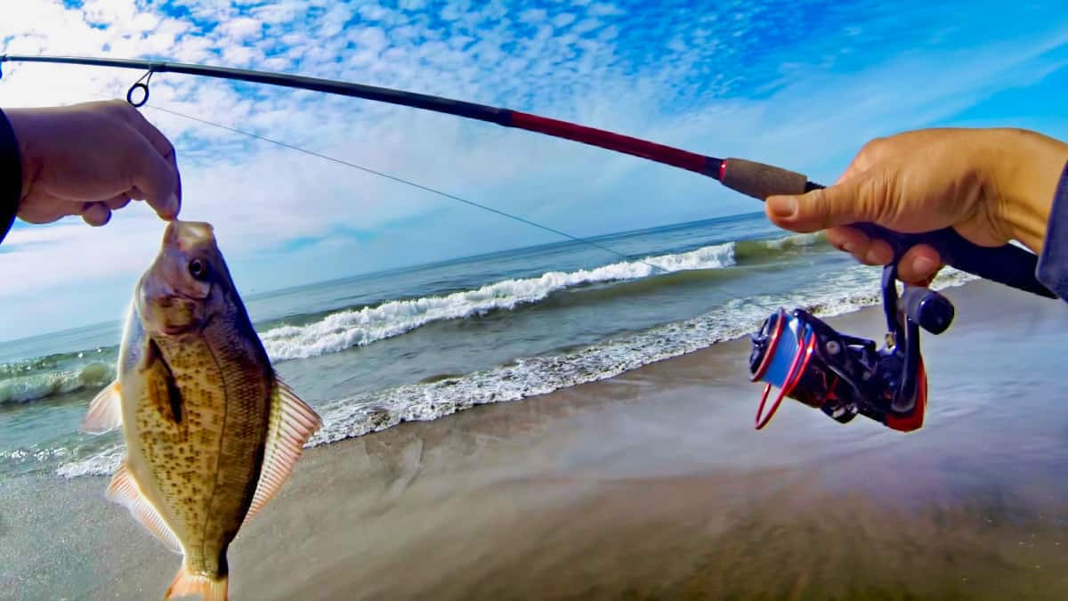 Surf Fishing Rod For Beginner