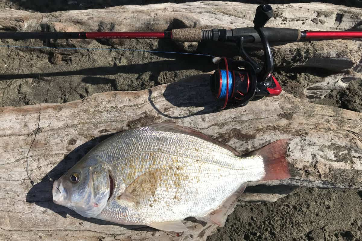 Best Light Tackle Combo For Surf Fishing
