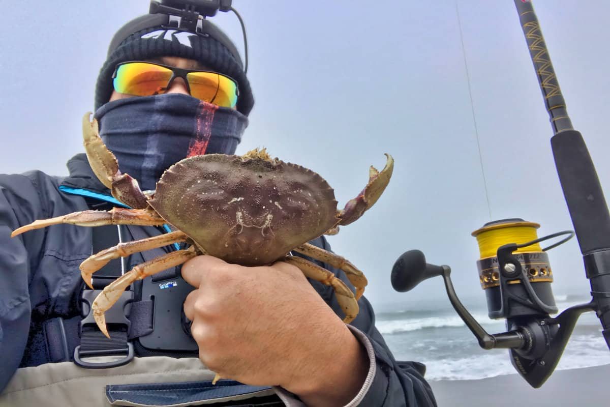 How To Catch Dungeness Crab From the Surf