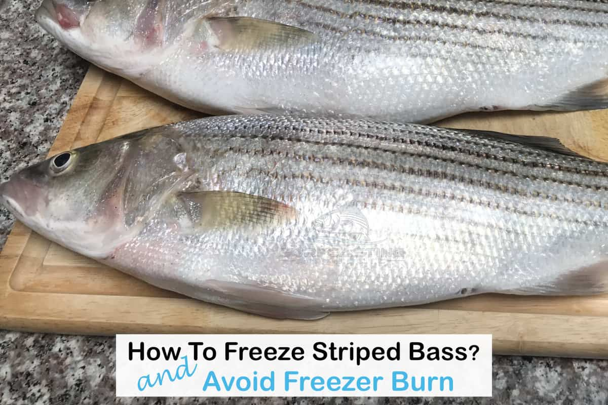 How To Properly Freeze Striped Bass And Avoid Freezer Burn?
