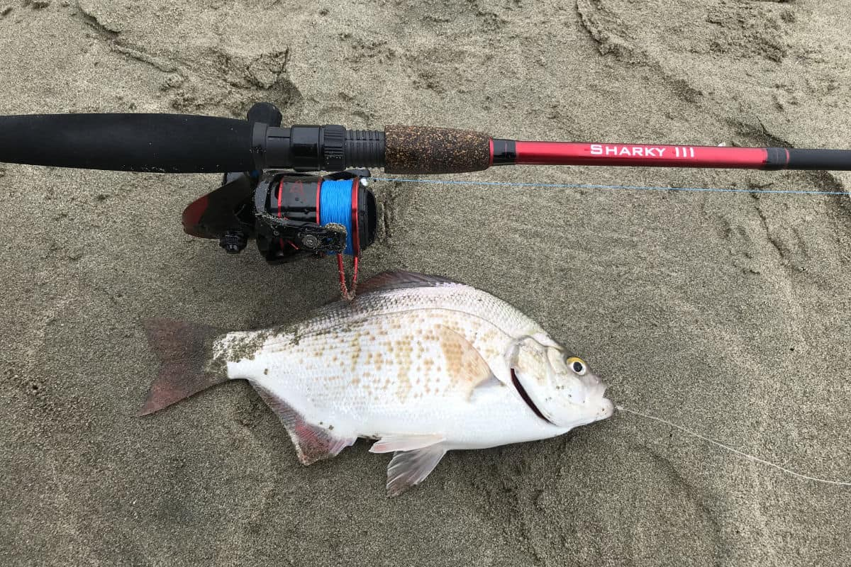 What Line Is Best For Surf Fishing?