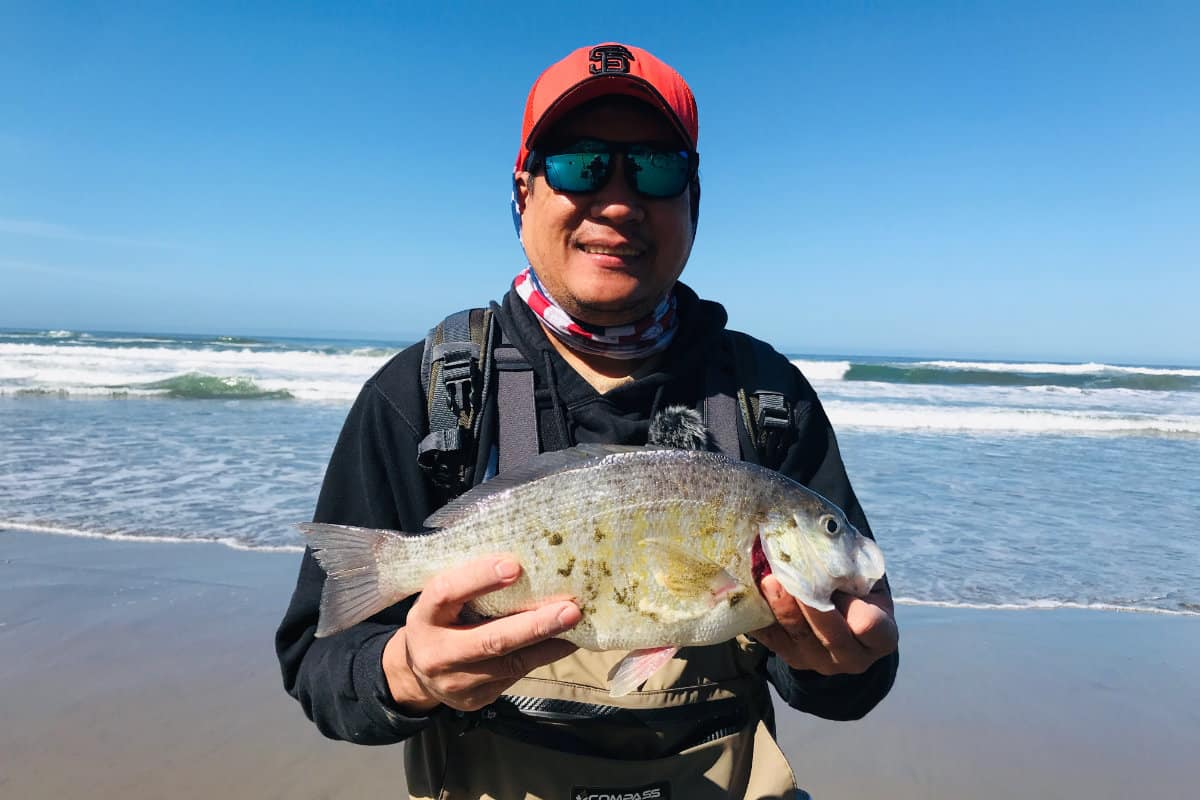 how to surf fish for surf perch?