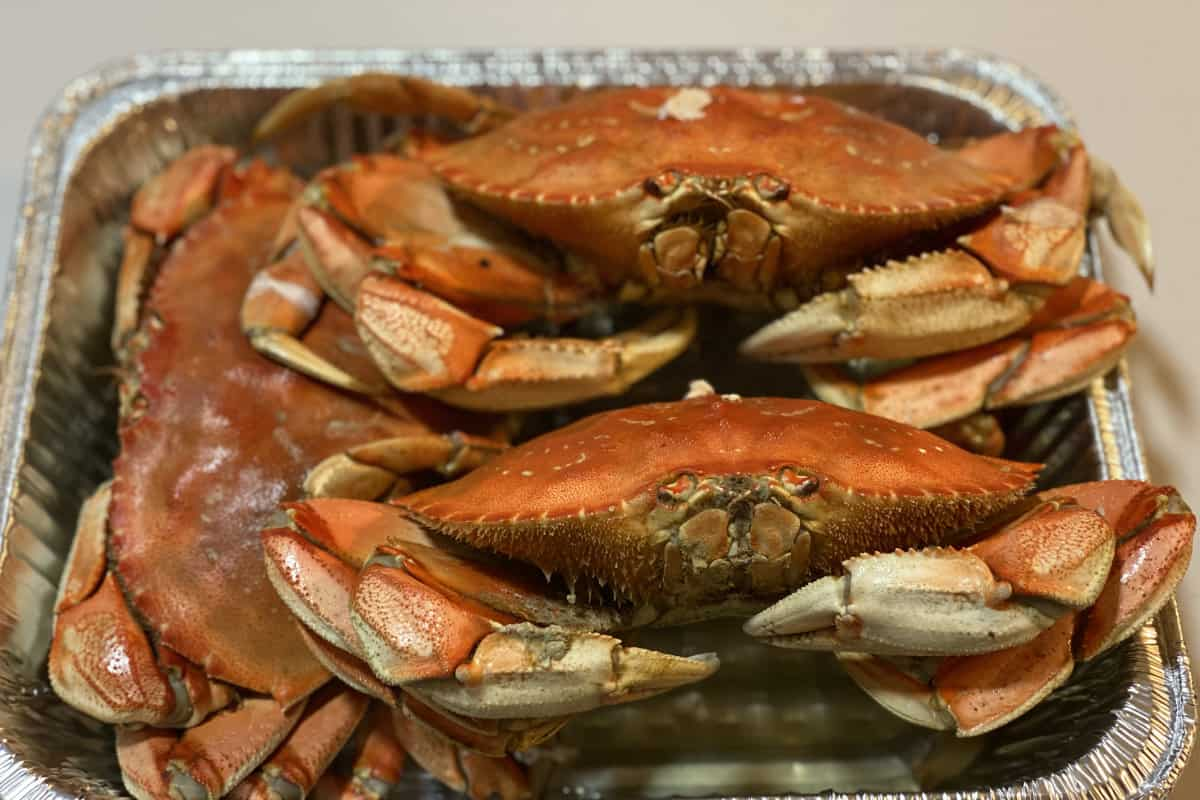 is dungeness crab safe to eat  surfcasting republic