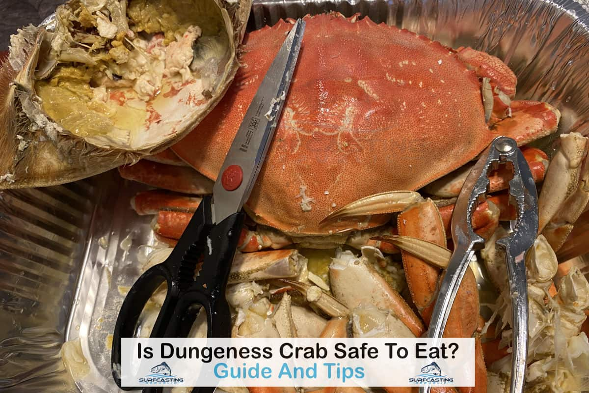Is Dungeness Crab Safe To Eat?
