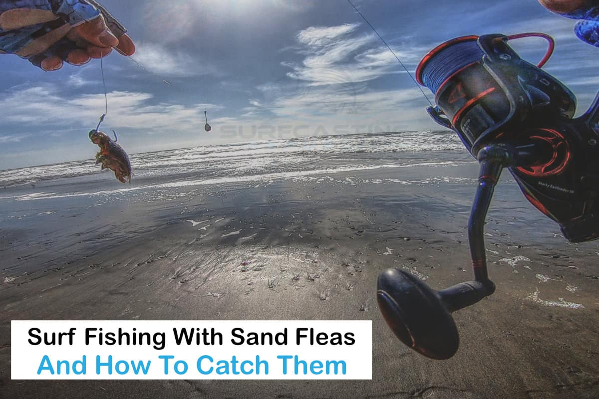 Learn How To Catch More Fish With Sand Fleas